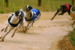 Dog Racing Hen Stag Party Manchester