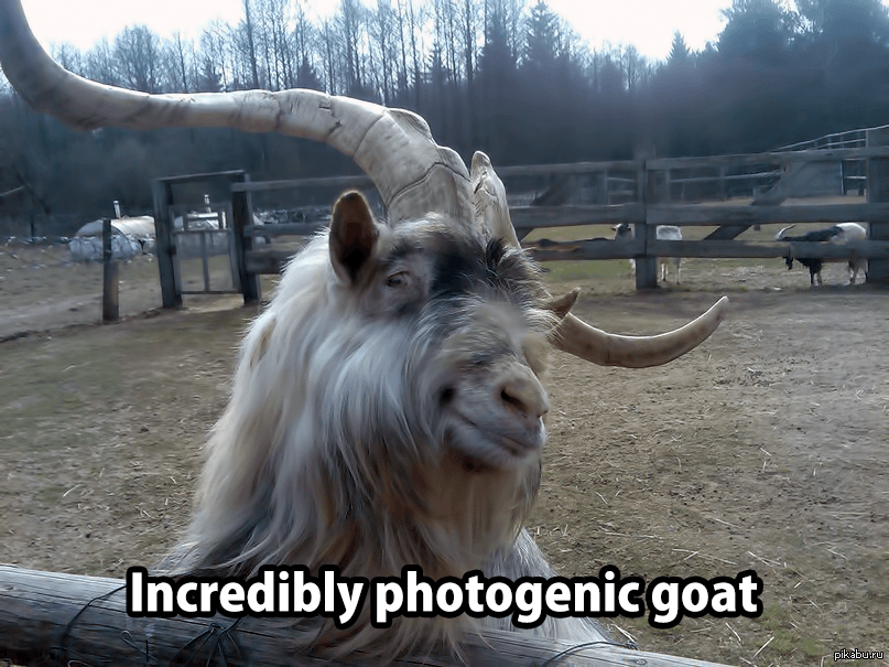 Incredibly Photogenic Goat